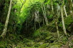 新緑の渓谷5