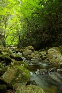 新緑の渓谷1