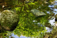新緑の渓谷2