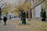 旅の写真館:パリ「落ち葉の舗道」