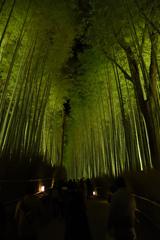 嵐山花灯路2017 ライトアップ