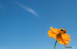 Take the pollen