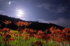 月と彼岸花