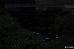 屋根付き橋とホタル