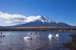 白鳥の湖2