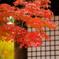 本土寺の秋