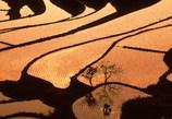土谷棚田の田植え