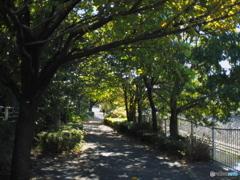 近所の秋02