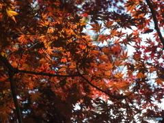 蚕糸の森晩秋 オールドレンズで04