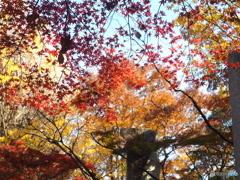 蚕糸の森晩秋 オールドレンズで02