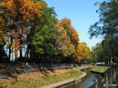 近所の秋03