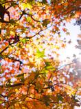木漏れ日の中で緑色に輝く・・