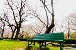 春色bench♪