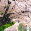 春の散歩道~明日から年中さん