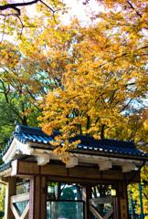 秋色の入り口