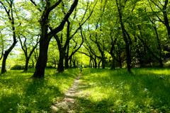 初夏の木洩れ日の中へ