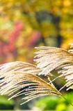 黄金色⭐️の輝き
