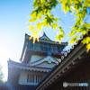 岩崎城の戦い (10月15日・日曜日・名古屋城撮影オフ会のご案内)