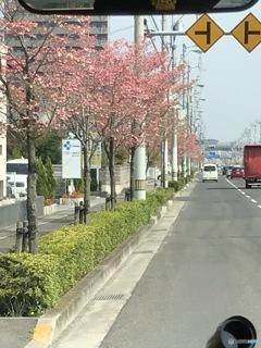花の道を行く
