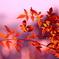 Autumn has come!