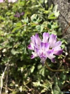 春が来た^ ^