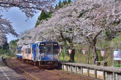 sakura と さくら