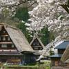 春 茅葺屋根のある風景