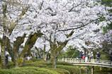 春 兼六園のにぎわい