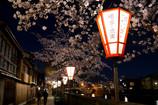 主計町 夜桜めぐり