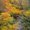 秋・森の中にて