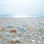 SONY NEX-5Tで撮影した(浜辺の宝石たち)の写真(画像)