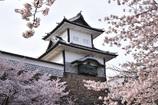 金沢城の春景