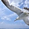 青空wing