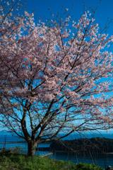 春の足音2