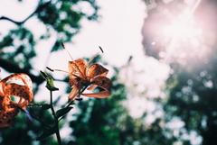 夏に向かう花
