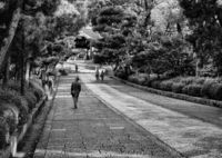 NIKON NIKON D600で撮影した(京都ひとり旅)の写真(画像)