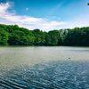 空と木々と池
