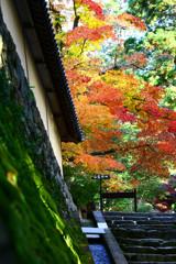 秋色の彩り
