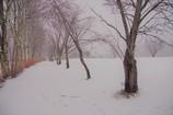 白い季節♬*.+゜