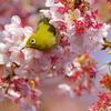 お花見最高~春うらら♫
