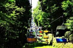 緑の森を空中散歩♬*.+゜