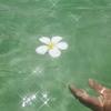 煌めき輝く神の宿る花♪。.:*・゜