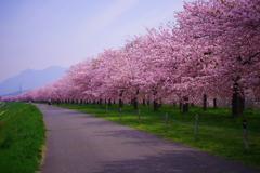 回想~春色の想い出~