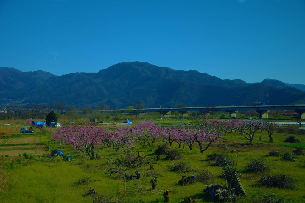 山と生きる・桃の花咲く春~,゜.:。+゜
