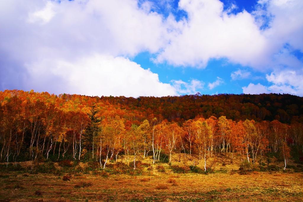 秋色Gradation☆。.:*・゜