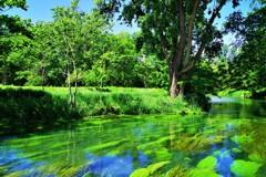 美しき川は流るる~♪。.:*・゜