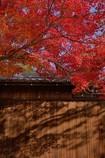 秋色のおもかげ♬*.+゜