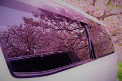 桜の想い☆。.:*・゜