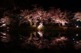 君と見た夜桜・・・