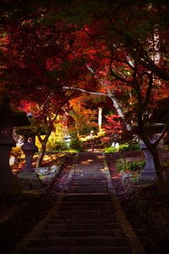 君と歩いた秋色の小径♬*.+゜